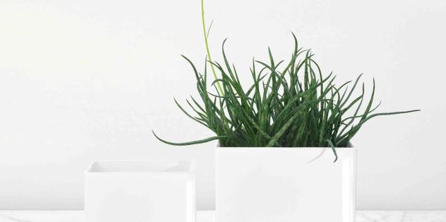 kvetinace-quadro